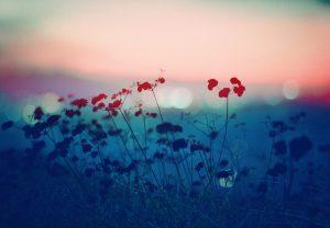 Untitled, Plantraits #1