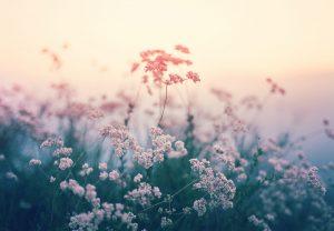 Untitled, Plantraits #2