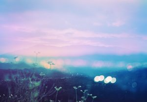 Untitled, Plantraits #6