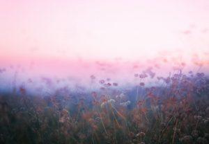 Untitled, Plantraits #9