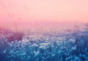 Untitled, Plantraits #11