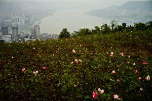 Untitled #15, Wanzhou, along the Yangtze River, Chongqing, China