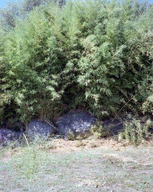 La Selva #01