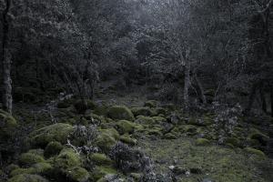 Le Sous Bois