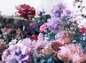 Rose-Gremlins
